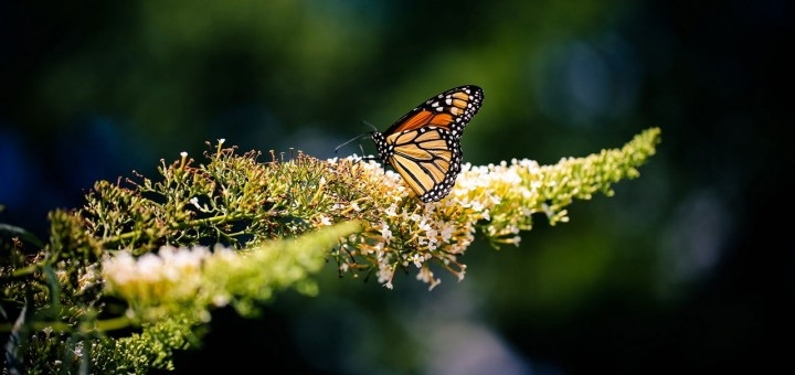 Nature Poetry, Butterfly Photograph