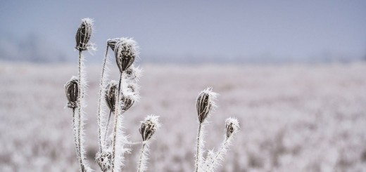 Poem About Winter